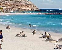 Kangaroo Island Banner.jpg