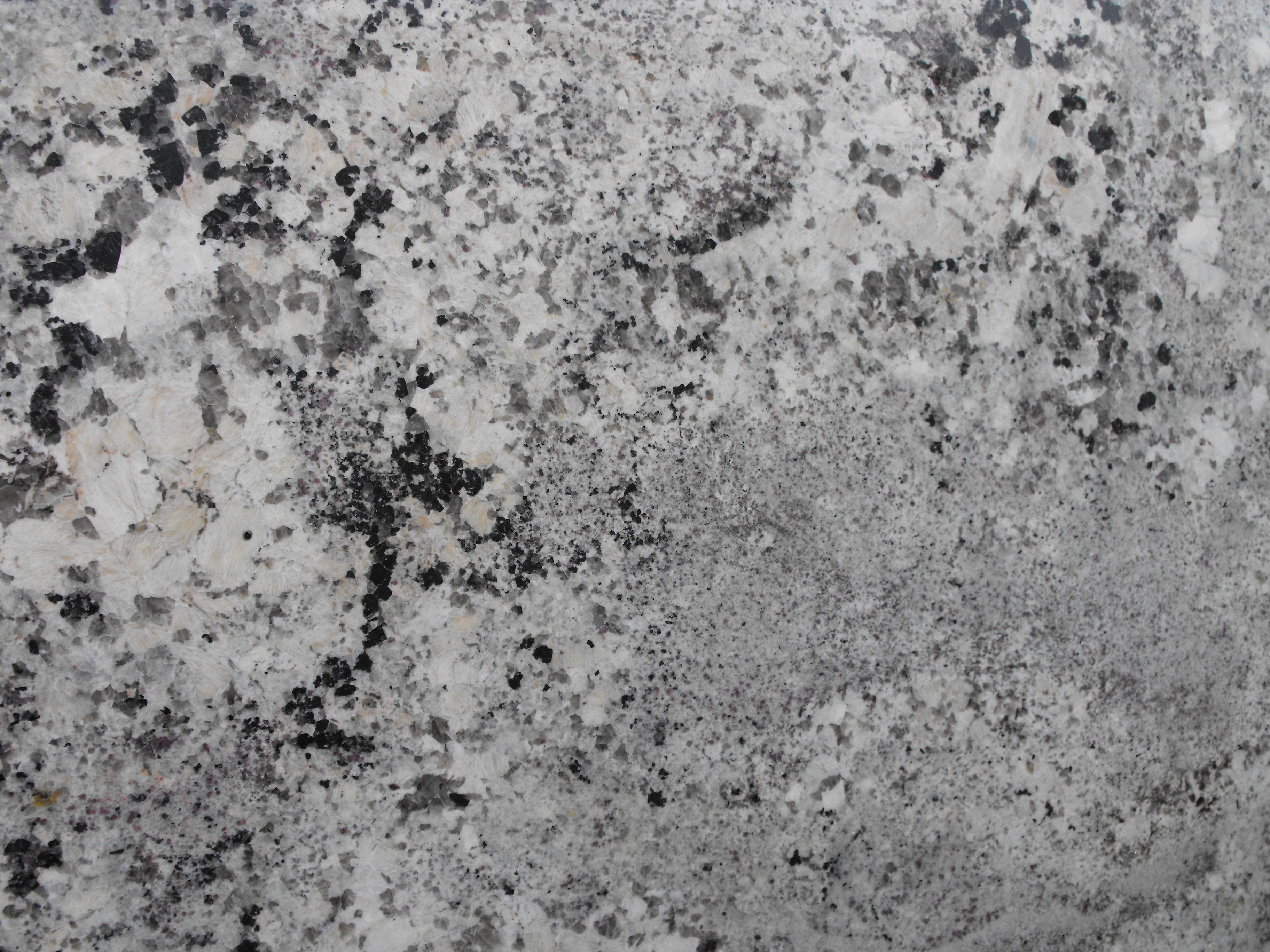 ALASKA WHITE (2).JPG