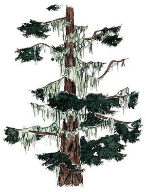 3tree-redwood-48-720.jpg