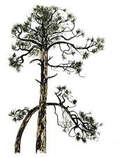 3tree-pine-48-720.jpg