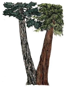 3tree-doug-48-720.jpg