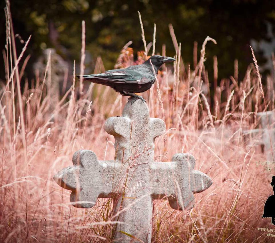 Brompton Cemetery,  By JR Pepper