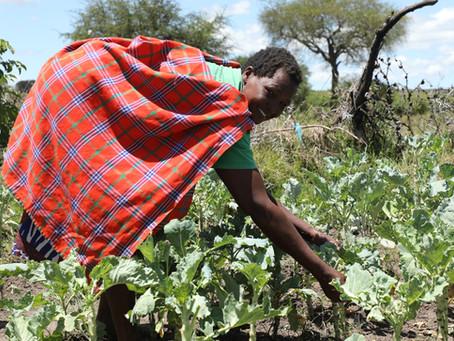 Kitchen Garden Initiative Benefits Women in Maasai Mara.