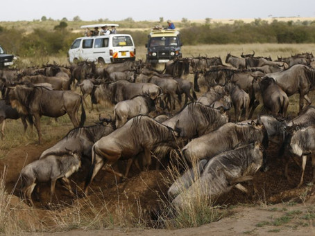 KENYAN CONSERVANCIES UNABLE TO PAY LEASED LAND AMID COVID-19 LINKED TO DROP IN TOURISM REVENUE
