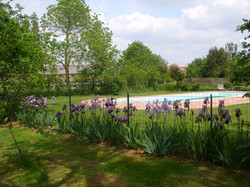 La piscine et les iris