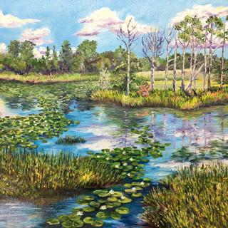 Waterlily Season