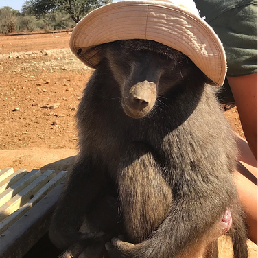 Marilyn August, volunteering at Naankuse, a wildlife sanctuary dedicated to preserving wildlife, cultures, and landscapes of Namibia.