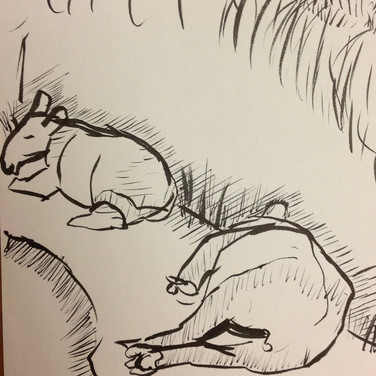 Marie Roberts drawing of Hippos
