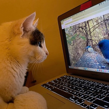 Cecile Chong, Homie takes to cat videos during the pandemic