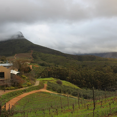 Sarah Gumgumji, Last July in South Africa, at an olive farm with the foggy clouds, hidden the mountain