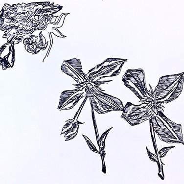August Levenson, Drawing Nature, Advanced Studio, June 29, 2020