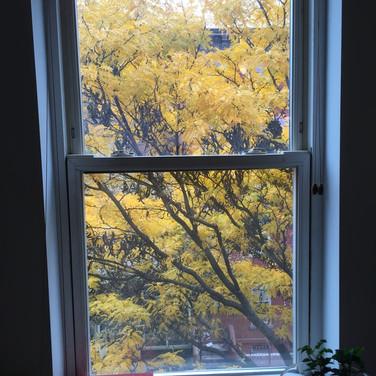 Randall Harris, Autumn from window at Figureworks