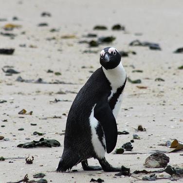 Sarah Gumguji, fun facts about penguins