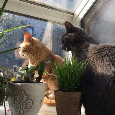 Meridith McNeal, Rik and Lola in Kitchen window, 2020,  CREATE Animals.jpg