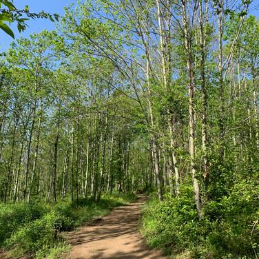 Catherine de Zagon, Wooded Path in Abruzzo, Italy, May 2020