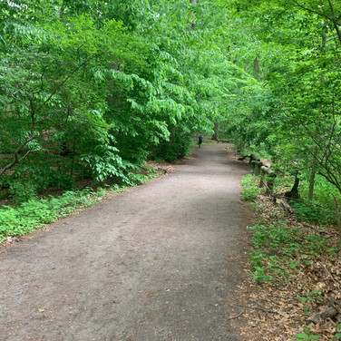 Vera Tineo, Forest Park, Queens, May 2020