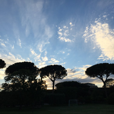 Meridith McNeal, Umbrella Pines Rome, May 2017