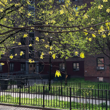 Quentin Williamston, Trees in Leaf Clinton Hill Brooklyn, May 2020