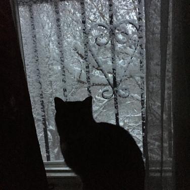 Randall Harris, Cat viewing Figureworks Garden in Winter