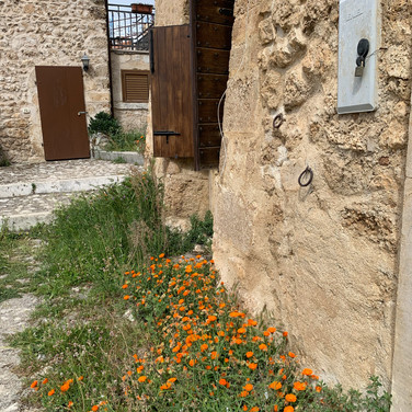 Catherine de Zagon, Wild Flowers beside the House in Abruzzo, Italy, May 2020