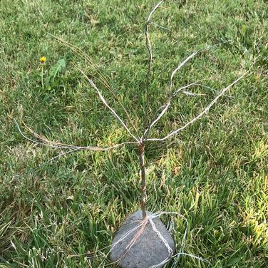 Marilyn August, Tree of Knowlege wire version
