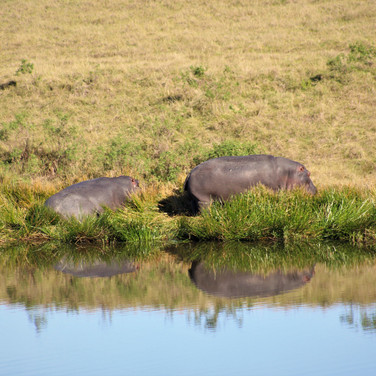 Sarah Gumgumji, Hippos