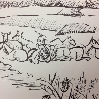 Marie Roberts drawing of a Herd