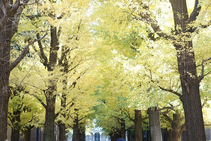 東大本郷キャンパスの紅葉