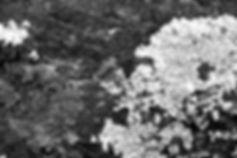 DSC09116 - コピー.jpg