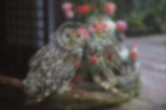 DSC01091.jpg