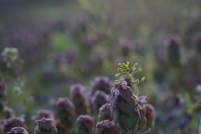 冬に蓄えられていたエネルギーが植物に宿り