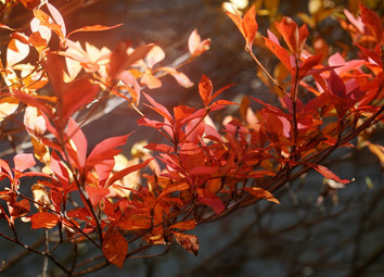 軽井沢の秋