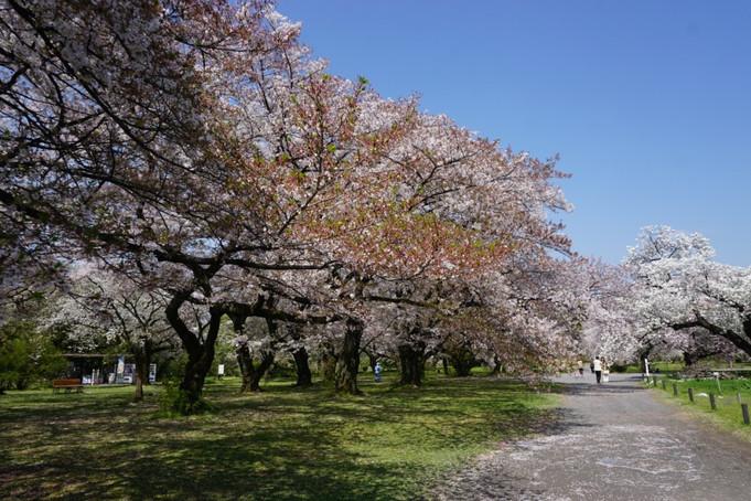 春の小石川植物園