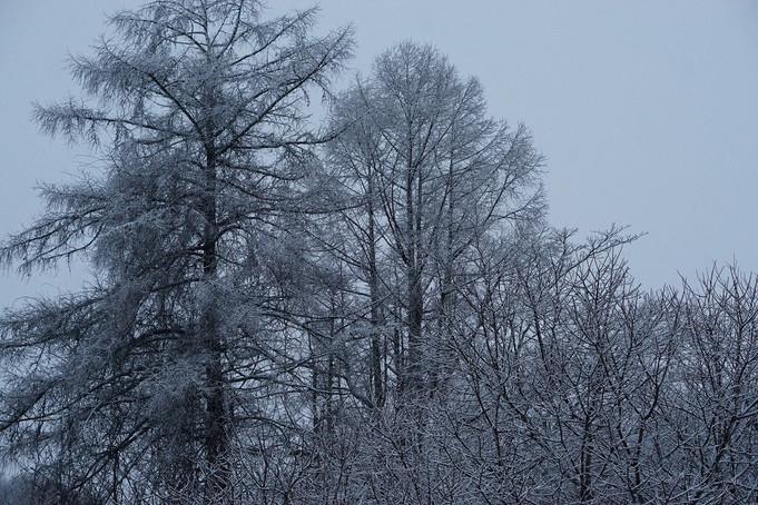 雪とコーヒーとレコード