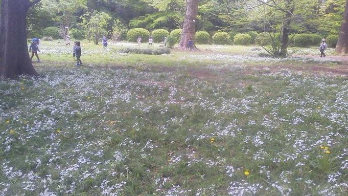 新緑の小石川植物園