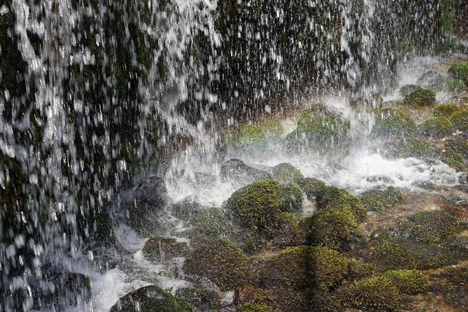 白糸の滝、音と小鳥