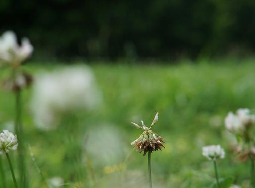 小石川植物園での生命の輪