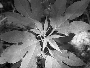 光と影と植物の緑