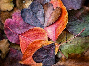 Cette fois l'automne est là !