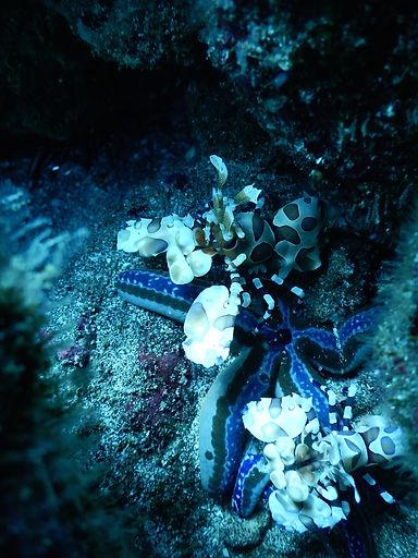 Shrimps Snorkel Tours