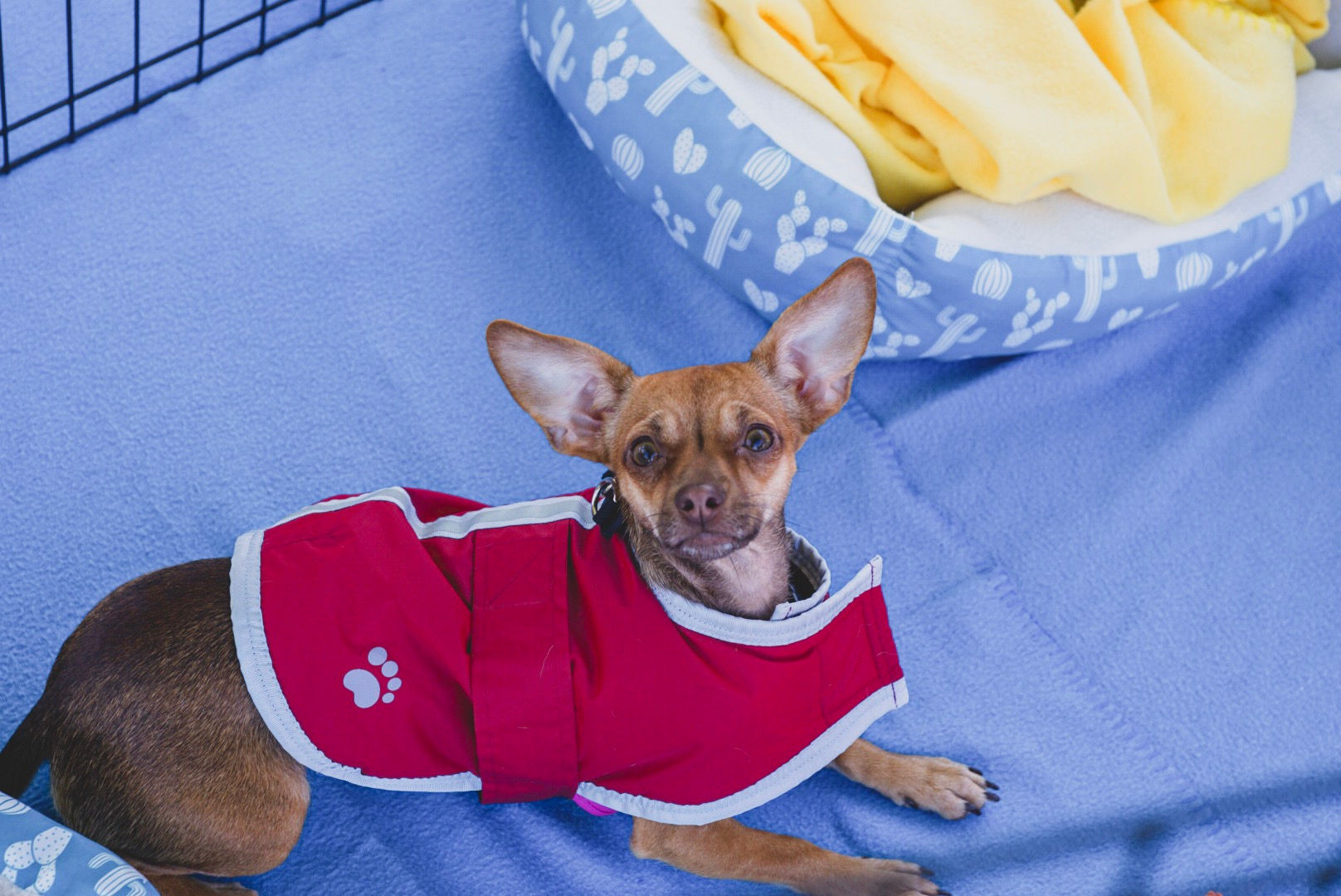 TVF_adoptdog.JPG
