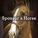 sponser horse.jpg