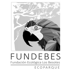 Fundebes