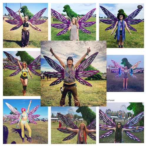 Dragonfly Wings Collage.jpg