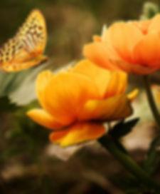 flowers-background-butterflies-beautiful