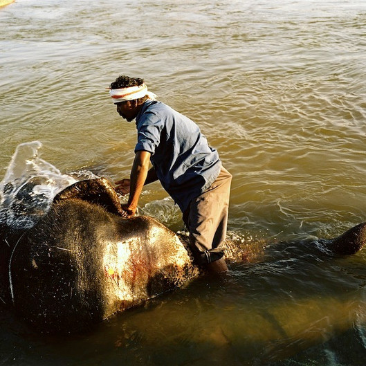 Hampi Elephant Bath 7_039287b_039287b-R2