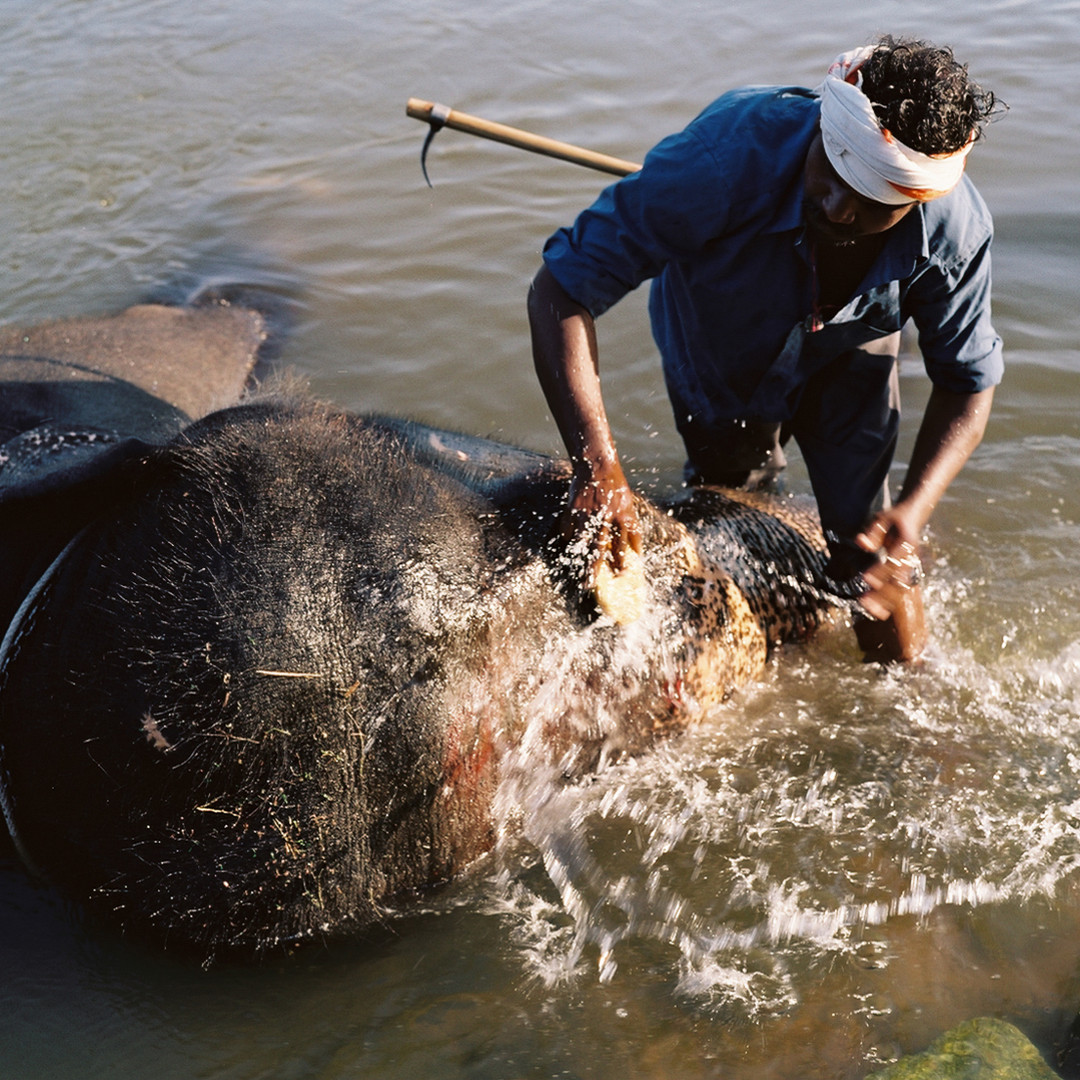 Hampi_Temple_Elephant_Bath_039287b_03928