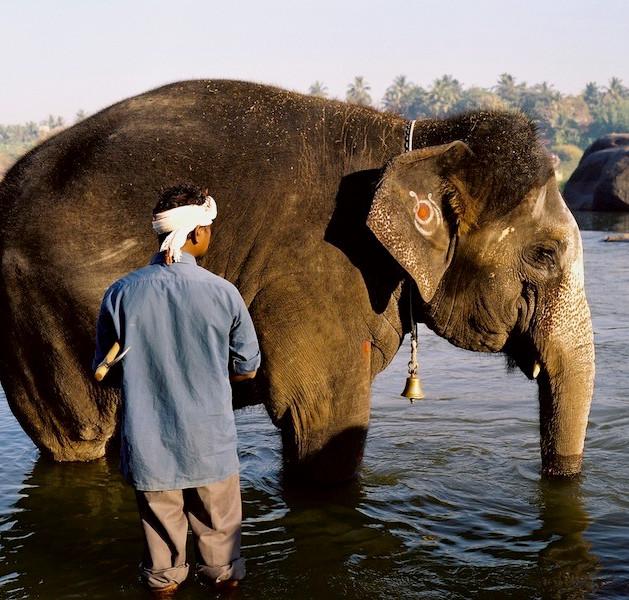 Hampi Temple Elephant