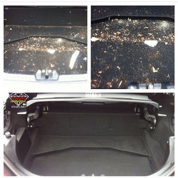 Dirty trunk photo before and after from about 3 years ago