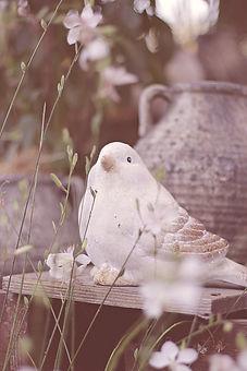 autumn-4471107_1920.jpg